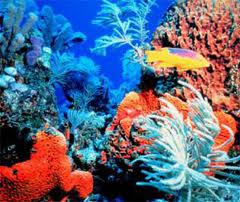 Healthy coral which provides home and shelter to marine life.(Photo courtesy of nwf.org)